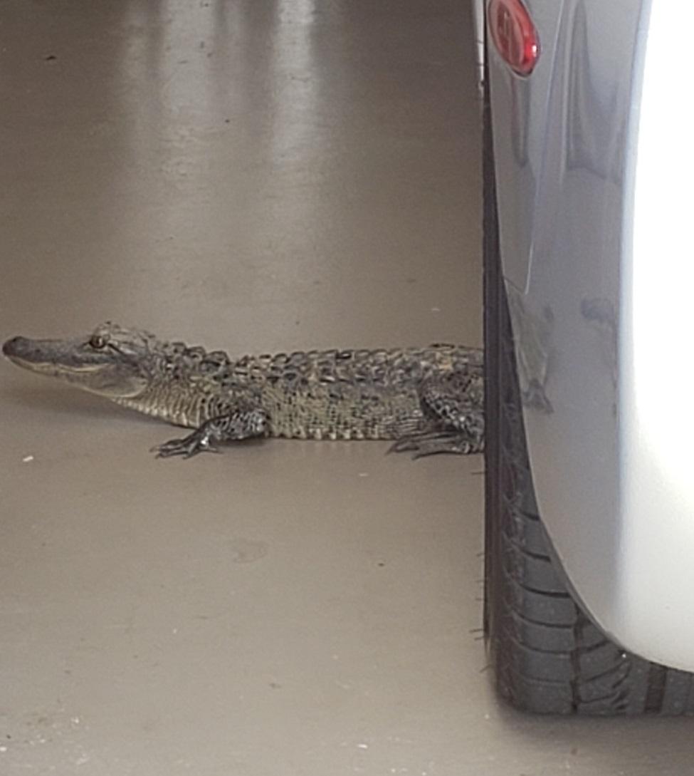 Name:  gator garage.jpg Views: 180 Size:  153.6 KB