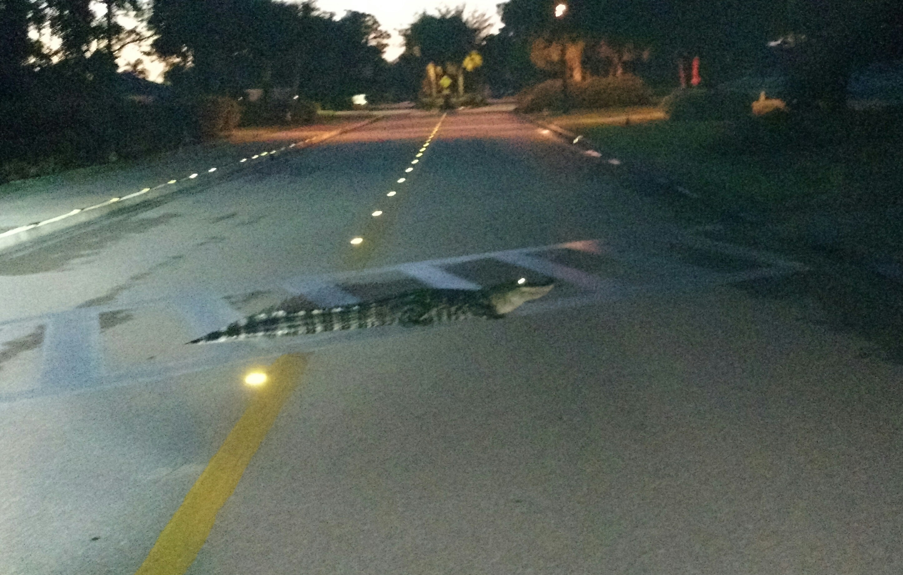 Name:  gator sidewalk.jpg Views: 189 Size:  1.14 MB