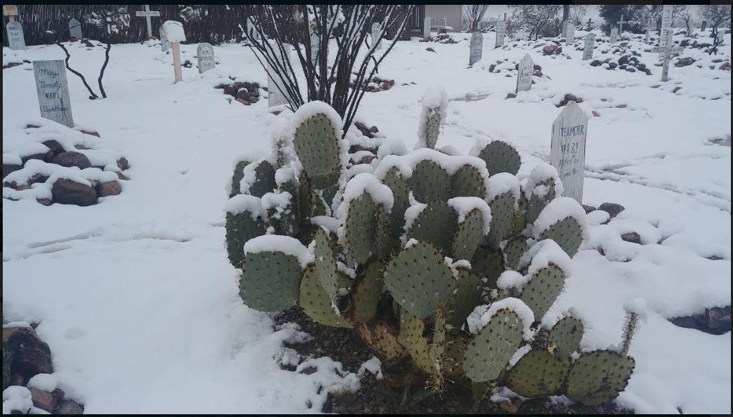 Name:  cacti.JPG Views: 61 Size:  113.4 KB