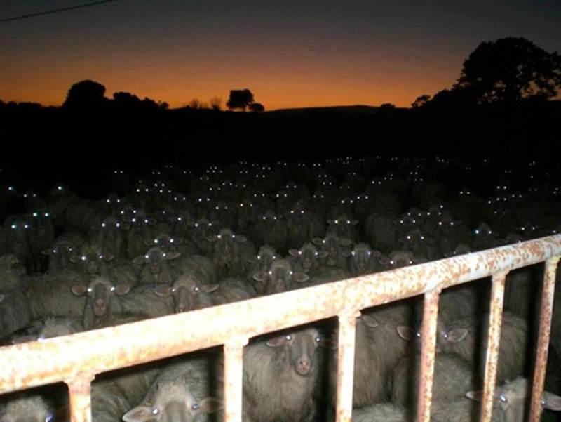 Name:  sheeple.jpg Views: 402 Size:  42.8 KB